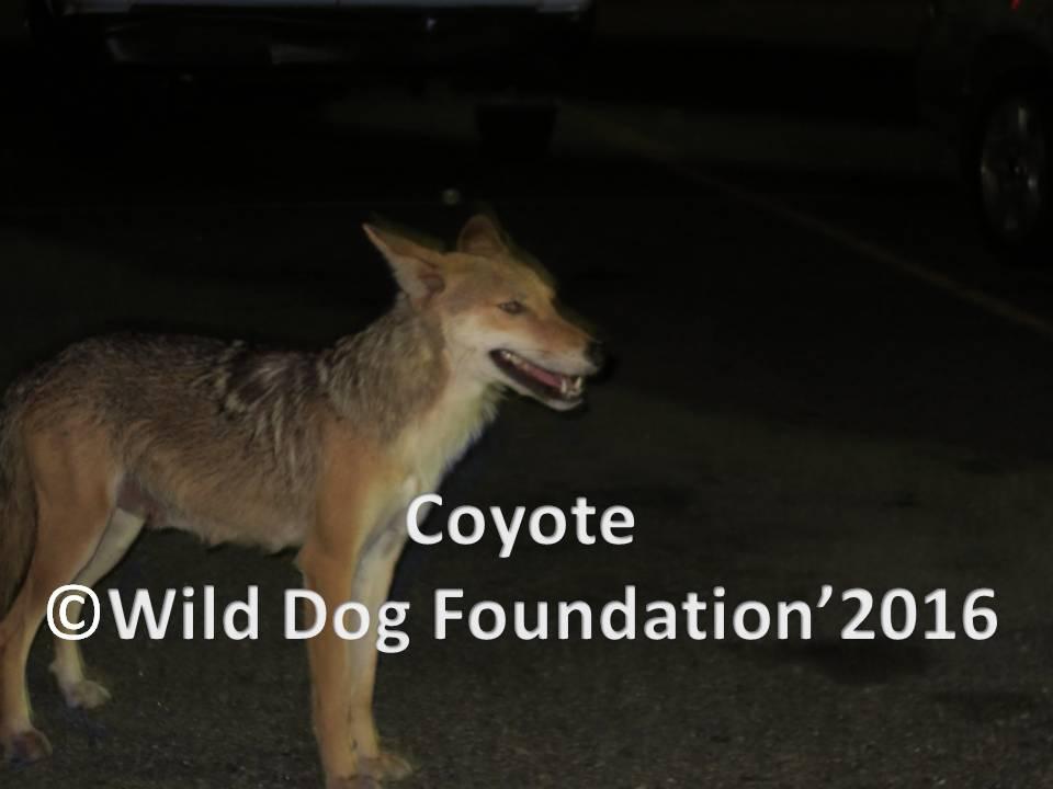 official photos a6d79 5fce3 Wild Dog Foundation